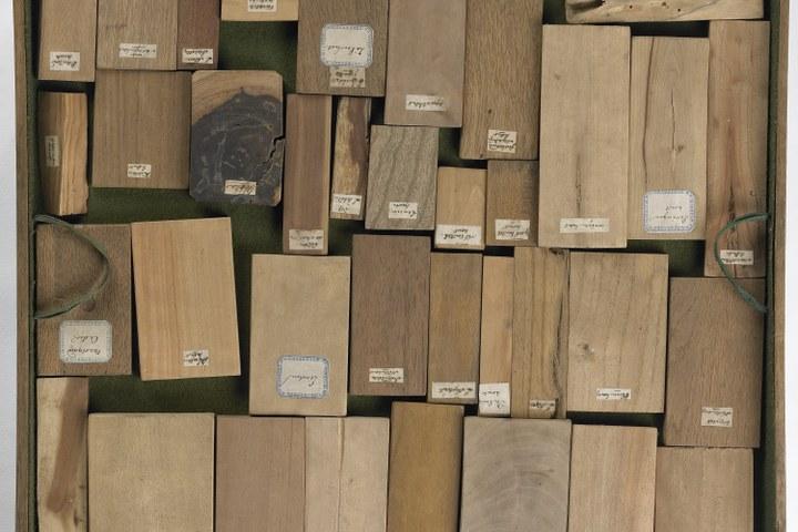 Xylotheek, vier laadjes met monsters van houtsoorten