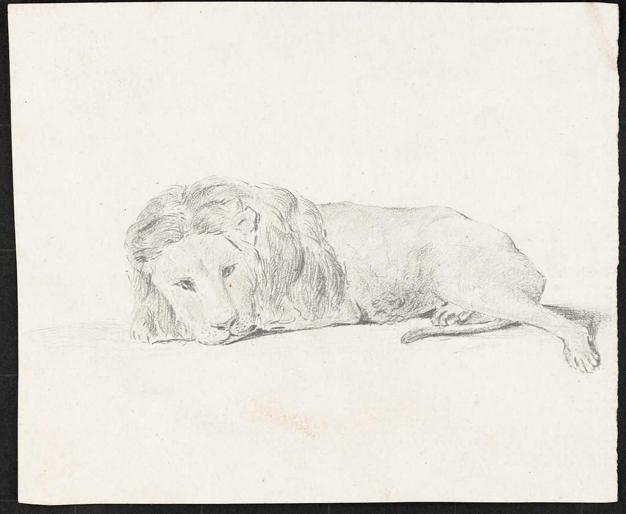 Studie van een liggende leeuw, zijaanzicht, Johan Pieter Bourjé
