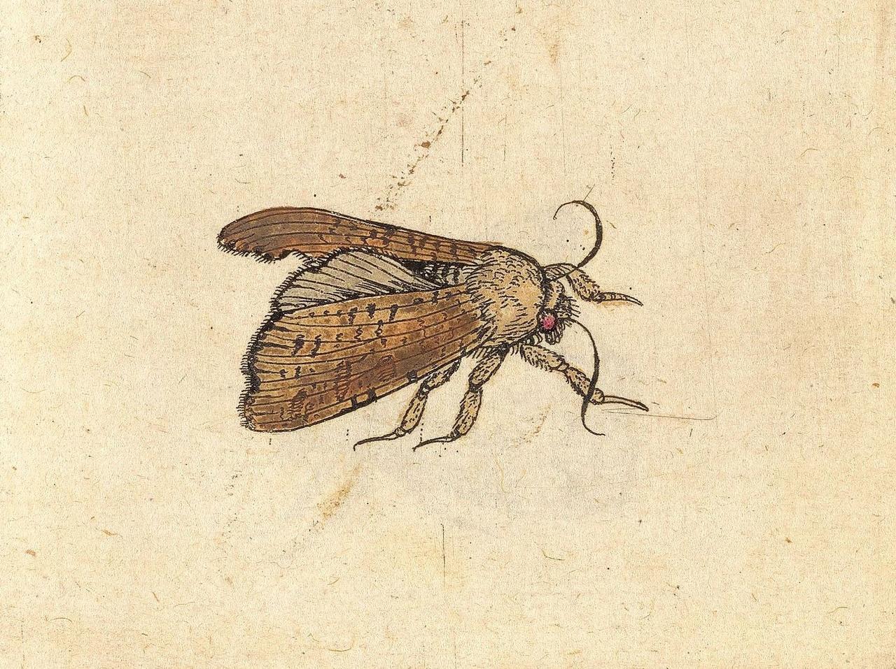 Johannes Goedaert detail Metamorphosis Naturalis deel 1_Zeeuws Museum.jpg